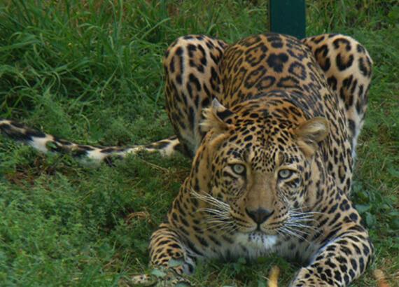 kufri-zoo